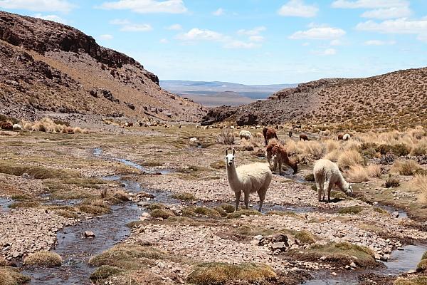 Visiter l'Amérique Latine en 3 destinations