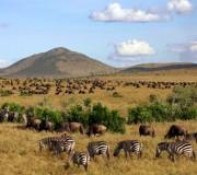 4  destinations pour un safari en Afrique